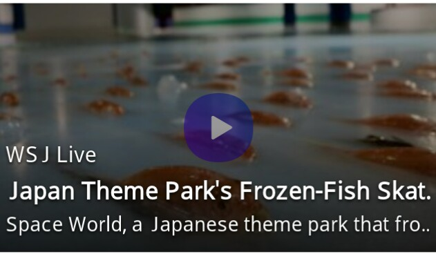 Japan skating rink slammed for freezing 5 000 fishes to for Does frozen fish go bad